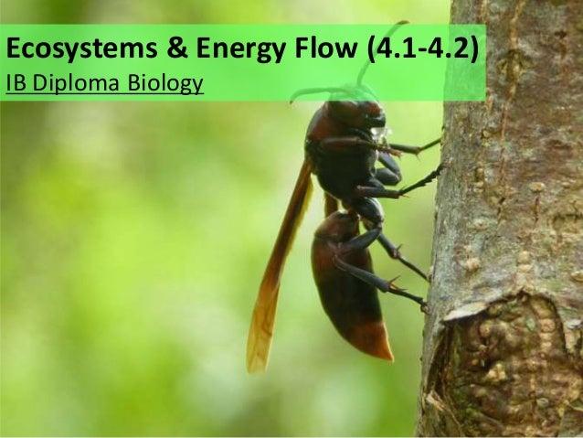 Ecosystems & Energy Flow (4.1-4.2) IB Diploma Biology