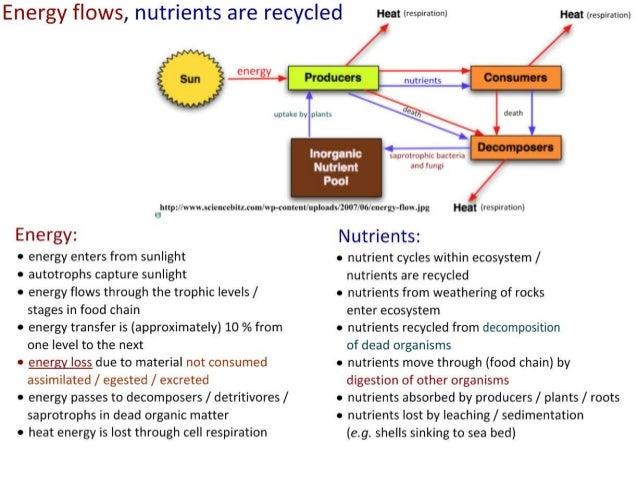 IB Biology 4.1-4.2 Slides: Ecosystems & Energy Flow