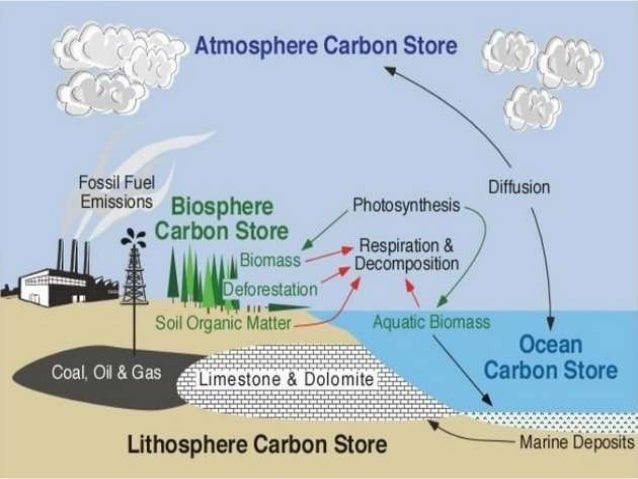 Ib biology 43 44 slides carbon cycle climate change ccuart Image collections