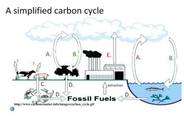 Ib biology 43 44 slides carbon cycle climate change 5 ccuart Image collections