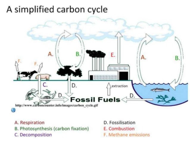 IB Biology 4344 Slides Carbon Cycle Climate Change – Carbon Cycle Worksheet High School
