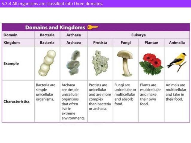 IB Biology 5.3 Slides: Classification & Taxonomy
