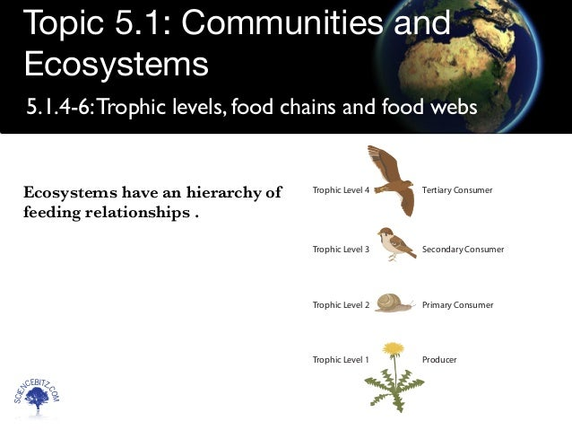 IB Biology Notes - 5.1 Communities and ecosystems