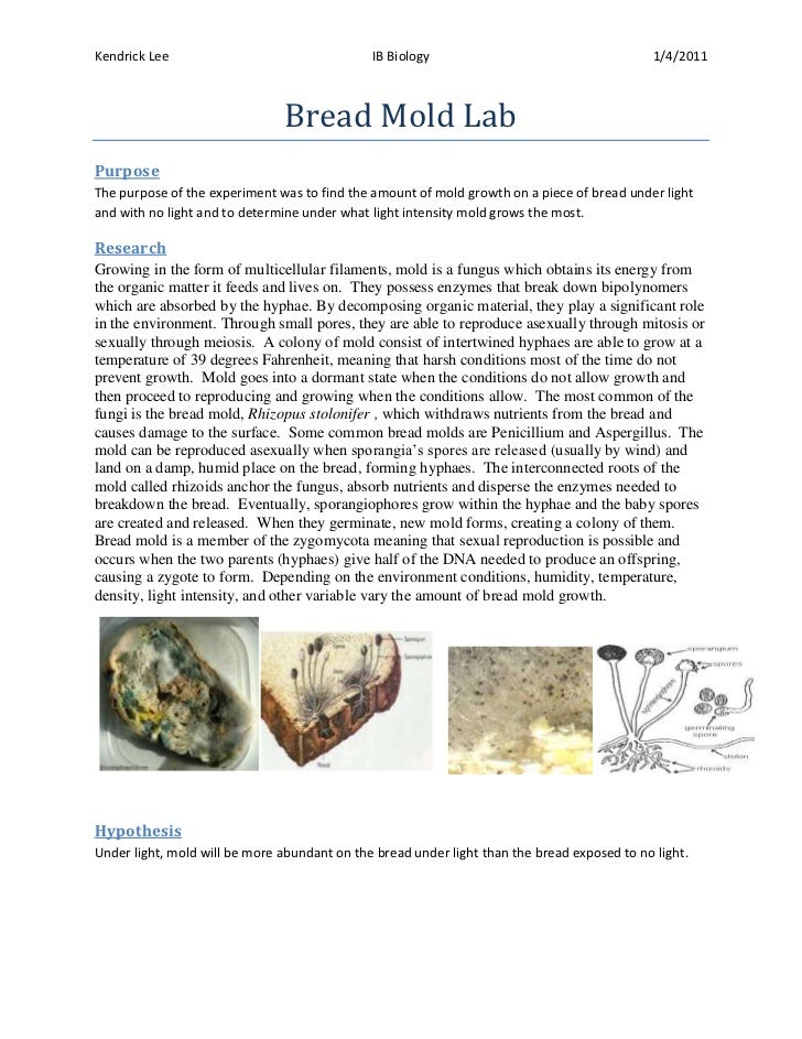 structure of essay conclusion What should be in the conclusion just like the introduction, there isn't one way to write a conclusion, and following one particular structure could lead to your conclusions becoming very formulaic here is a general guide to what you might include in a conclusion: a brief explanation of your main findings or ideas.