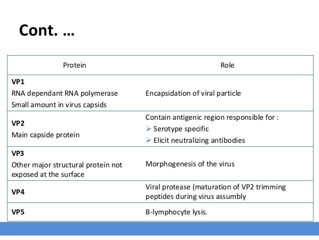 Cont. … RoleProtein Encapsidation of viral particle VP1 RNA dependant RNA polymerase Small amount in virus capsids Contain...