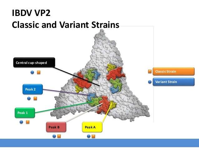 IBDV VP2 Classic and Variant Strains Central cup-shaped Peak APeak B Peak 1 Variant Strain Peak 2 Classic Strain