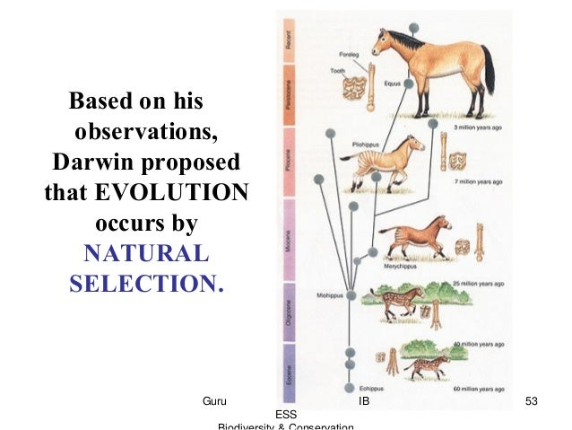 Why Is Competition Important In Natural Selection