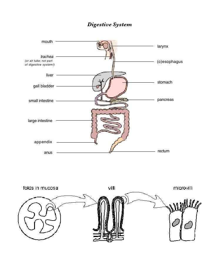 Ib fiology01