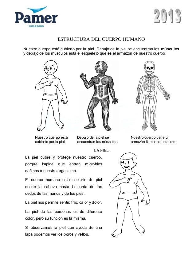 Encantador Páginas Para Colorear Músculos Para Niños Colección ...
