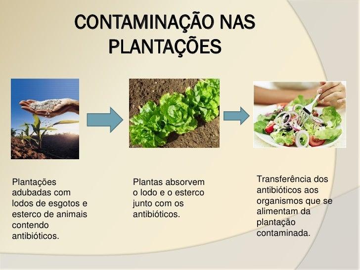 CONTAMINAÇÃO NAS                 PLANTAÇÕESPlantações           Plantas absorvem     Transferência dosadubadas com        ...