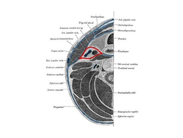 ICA anatomy