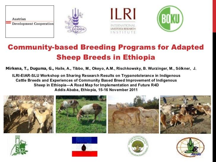 Community-based Breeding Programs for Adapted Sheep Breeds in Ethiopia Mirkena, T., Duguma, G.,  Haile, A., Tibbo, M., Oke...