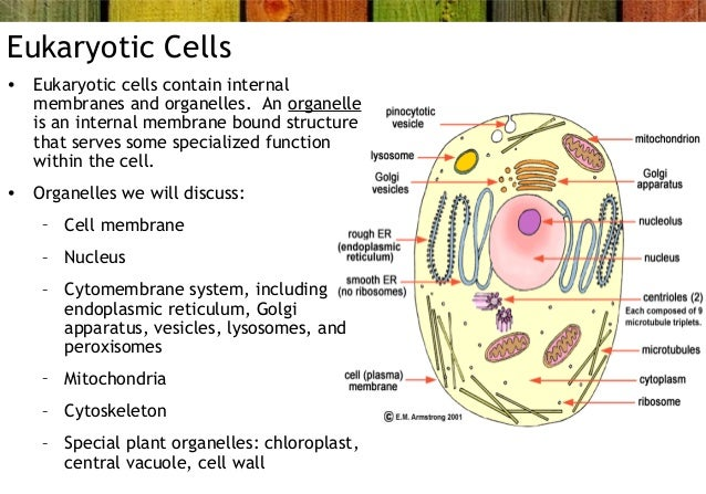 The difference between eukaryotic and prokaryotic cells