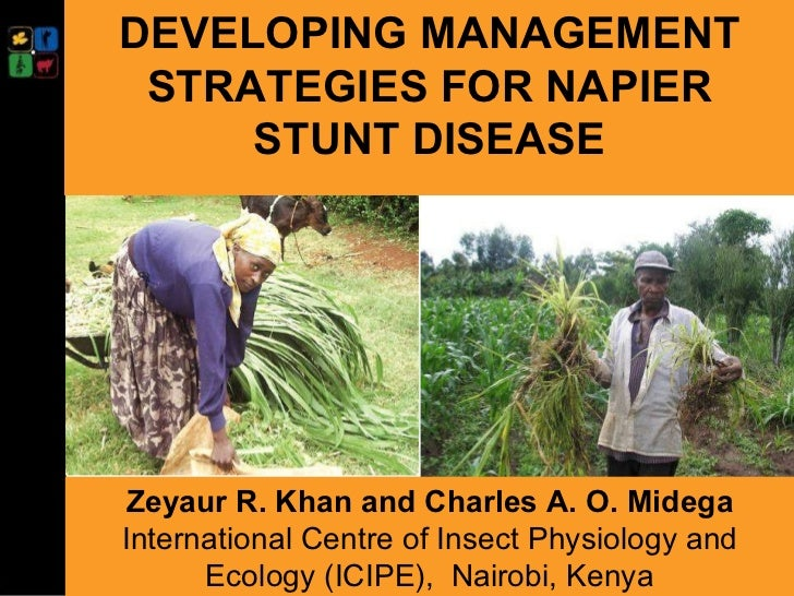DEVELOPING MANAGEMENT STRATEGIES FOR NAPIER STUNT DISEASE Presented at the  ASARECA/ILRI Workshop on Mitigating the Impact...