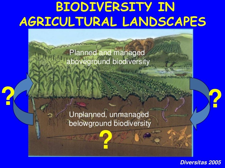 agricultural sustainability and biodiversity essay Importance of agriculture areas for biodiversity conservation agriculture is the most dominant human influence on earth and environmental sustainability.
