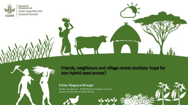 Friends, neighbours and village cereal stockists: hope for non-hybrid seed access? Esther Njuguna-Mungai Gender Coordinato...