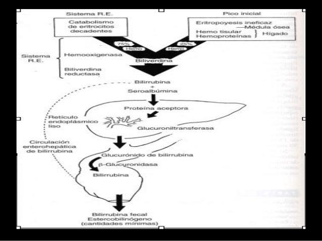 Medición de la bilirrubina • El método más habitual de determinación de la bilirrubina (van den Bergh) se basa en el uso d...