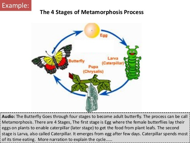 Audio: The Butterfly Goes through four stages to become adult butterfly. The process can be callMetamorphosis. There are 4...
