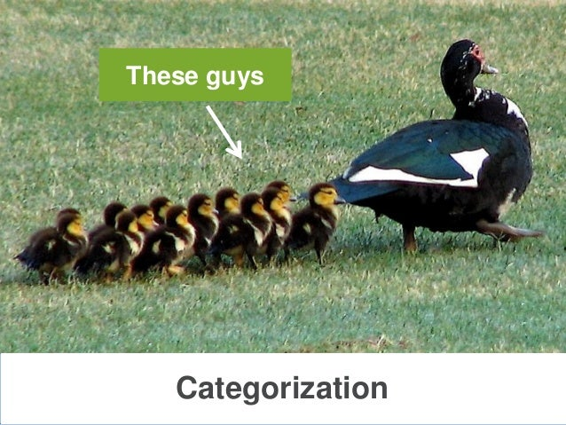 CategorizationThese guys