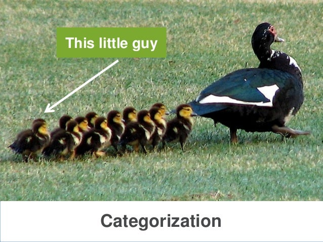 CategorizationThis little guy