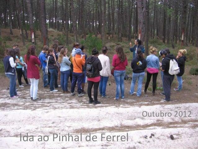 Outubro 2012Ida ao Pinhal de Ferrel