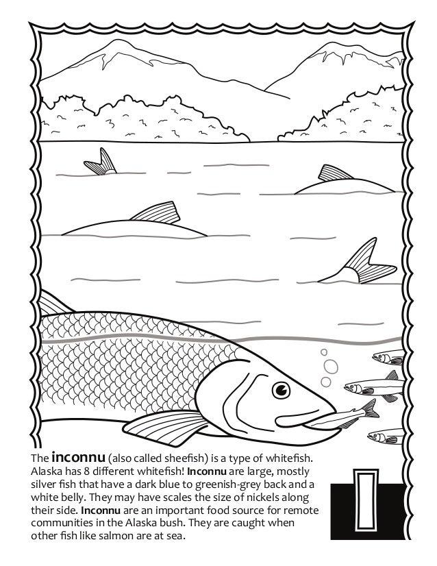 Alaska Fish ABC's Coloring Book
