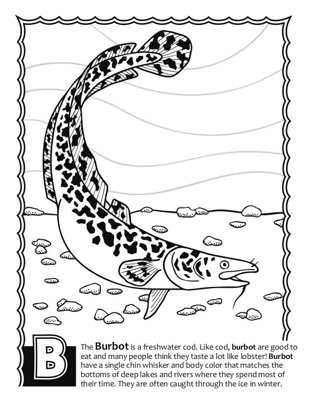 Alaska Fish ABC's Coloring Book