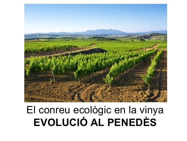 El conreu ecològic en la vinya EVOLUCIÓ AL PENEDÈS
