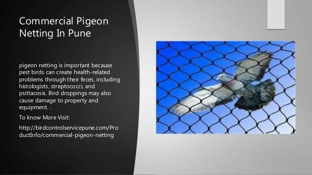 Ideal Bird Netting is best bird control service provider in Pune