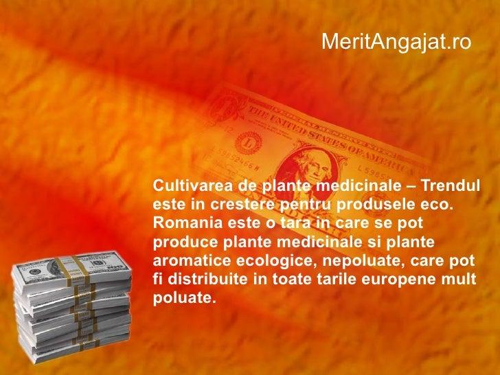 MeritAngajat.ro Cultivarea de plante medicinale – Trendul este in crestere pentru produsele eco. Romania este o tara in ca...