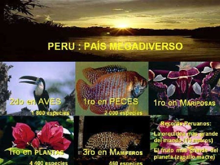 EL PERÚ TIENE DIVERSAS CULTURAS, ETNIAS,   LENGUAS, DIALECTOS, BIODIVERSIDAD, CLIMAS, TERRENOS, ANIMALES, HISTORIA...PERO ...