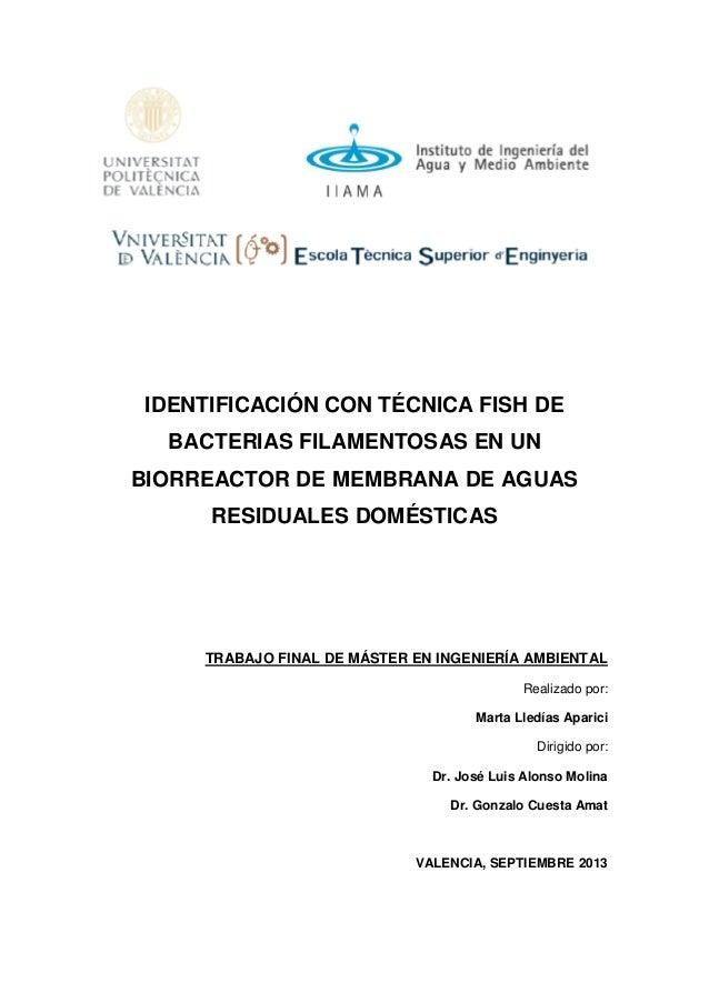 IDENTIFICACIÓN CON TÉCNICA FISH DE BACTERIAS FILAMENTOSAS EN UN BIORREACTOR DE MEMBRANA DE AGUAS RESIDUALES DOMÉSTICAS TRA...