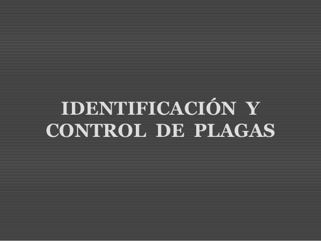 Identificaci n y control de plagas for Control de plagas badajoz