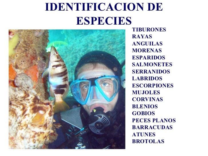 <ul>IDENTIFICACION DE ESPECIES </ul><ul><li>TIBURONES