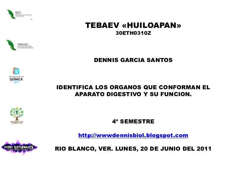 TEBAEV «HUILOAPAN»<br />30ETH0310Z<br />DENNIS GARCIA SANTOS  <br />IDENTIFICA LOS ORGANOS QUE CONFORMAN EL APARATO DIGEST...