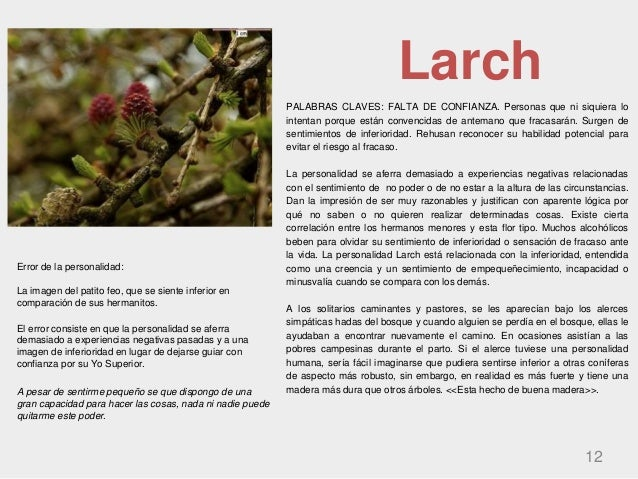 Larch PALABRAS CLAVES: FALTA DE CONFIANZA. Personas que ni siquiera lo intentan porque están convencidas de antemano que f...