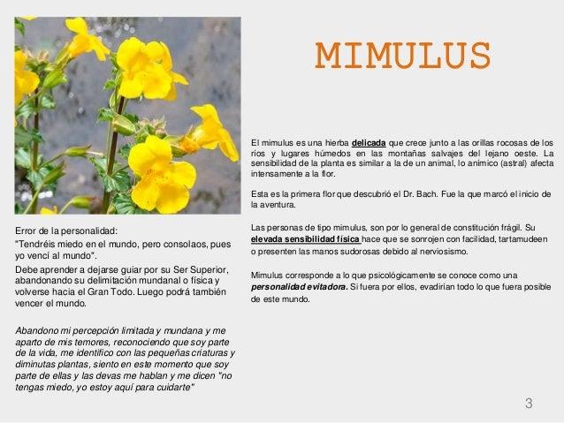 MIMULUS 3 El mimulus es una hierba delicada que crece junto a las orillas rocosas de los ríos y lugares húmedos en las mon...