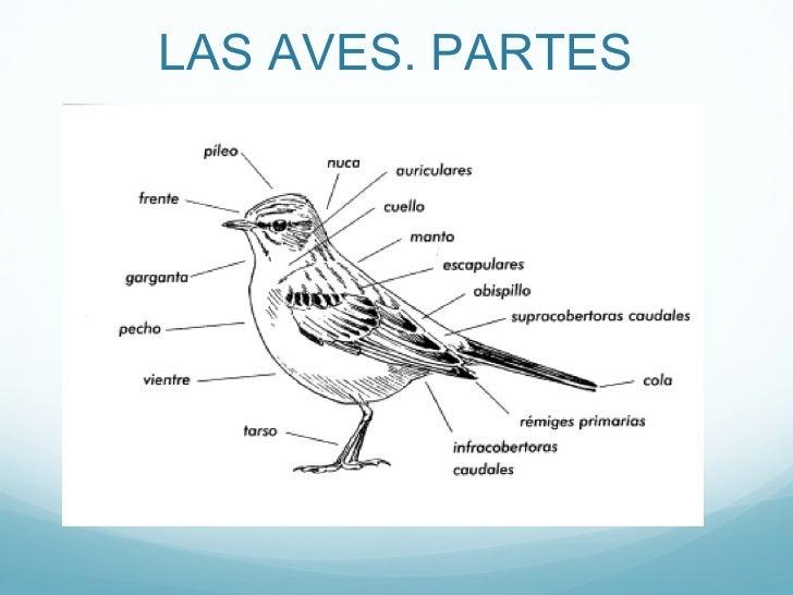 LAS AVES. PARTES