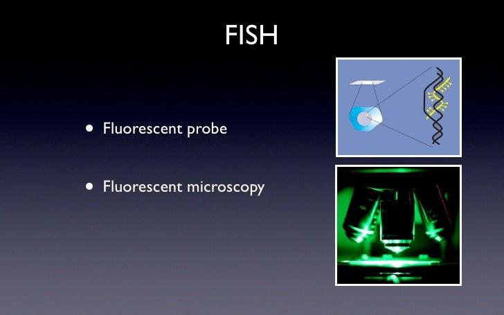 FISH   •   Fluorescent probe   • Fluorescent microscopy