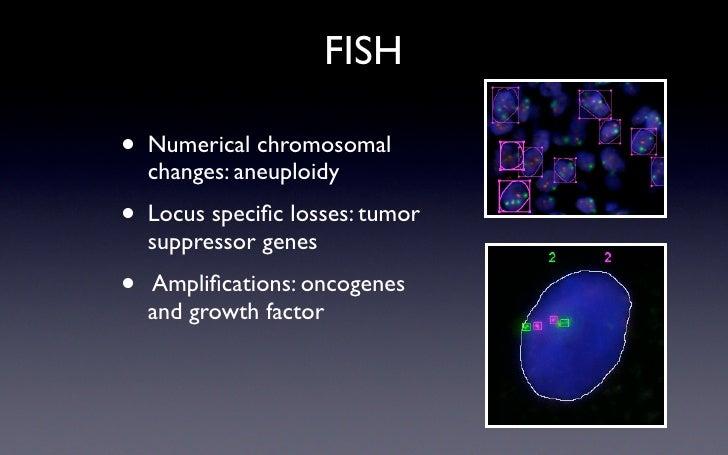 FISH  •   Numerical chromosomal     changes: aneuploidy • Locus specific losses: tumor     suppressor genes •   Amplificatio...