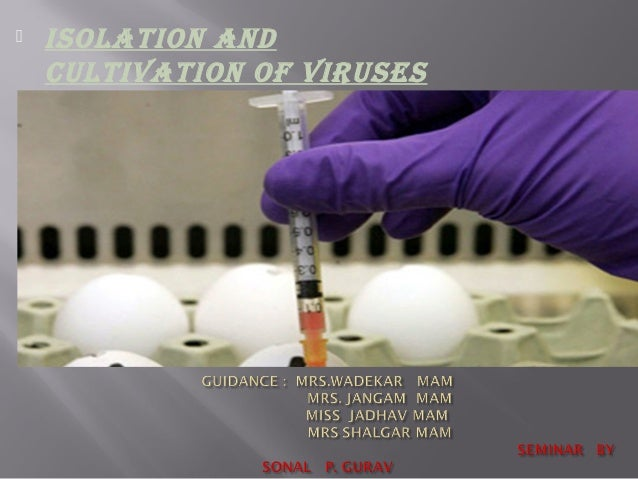  ISOLATION AND CULTIVATION OF VIRUSES