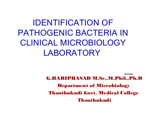 IDENTIFICATION OF PATHOGENIC BACTERIA IN CLINICAL MICROBIOLOGY LABORATORY G.HARIPRASAD M.Sc.,M.Phil.,Ph.D Department of Mi...