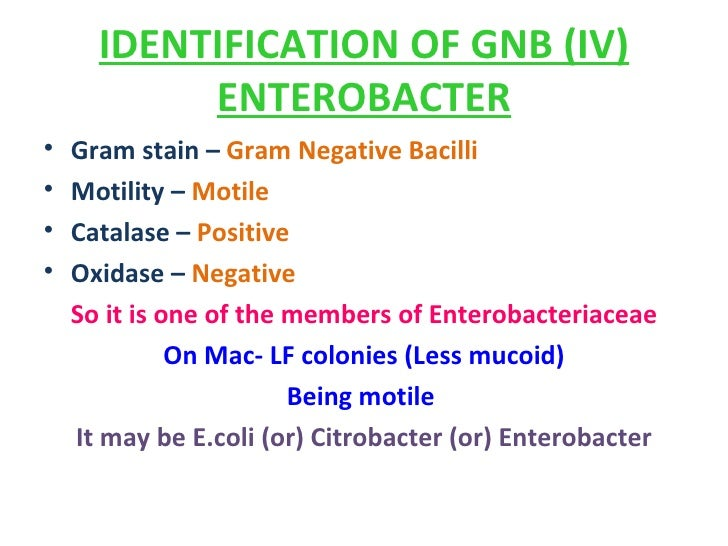 Enterobacteriaceae Flow Chart Mersnoforum
