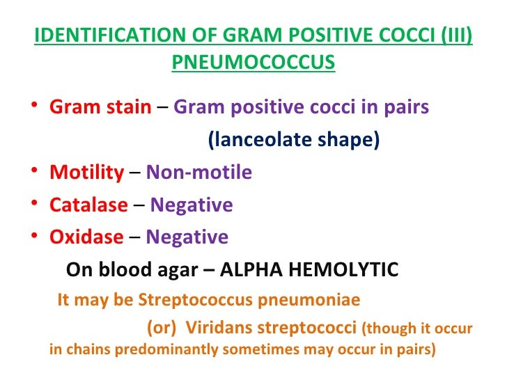 gram positive pathogenic cocci If your doctor suspects you have an infection, they may order a culture and gram stain to check for bacteria if bacteria are present, this test can also help your doctor learn if the bacteria are gram negative or gram positive.