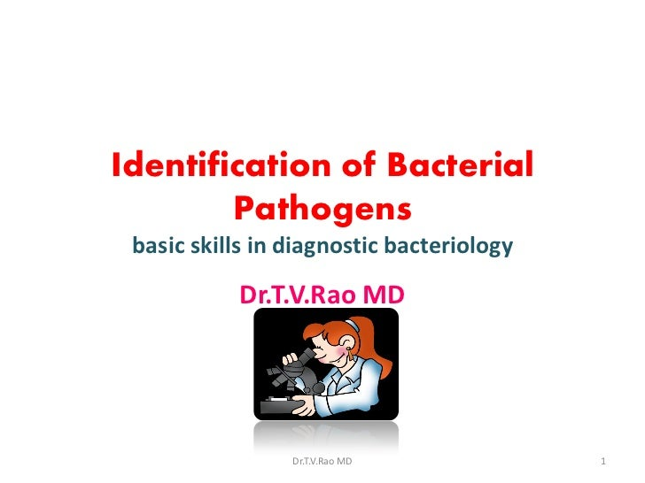 Identification of Bacterial        Pathogens basic skills in diagnostic bacteriology           Dr.T.V.Rao MD              ...