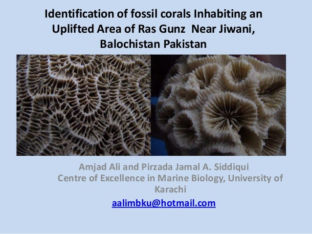 Identification of fossil corals Inhabiting anUplifted Area of Ras Gunz Near Jiwani,Balochistan PakistanAmjad Ali and Pirza...