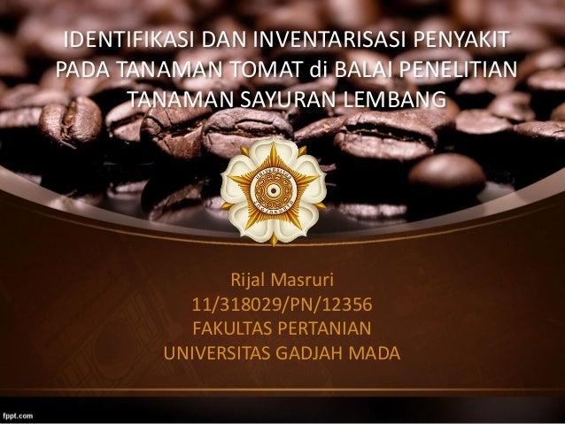 IDENTIFIKASI DAN INVENTARISASI PENYAKIT PADA TANAMAN TOMAT di BALAI PENELITIAN TANAMAN SAYURAN LEMBANG Rijal Masruri 11/31...