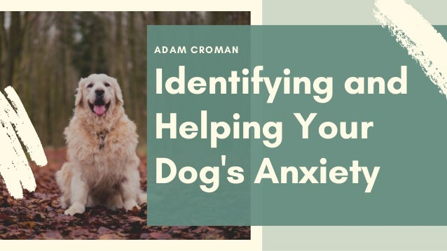 ADAM CROMAN Identifying and Helping Your Dog's Anxiety