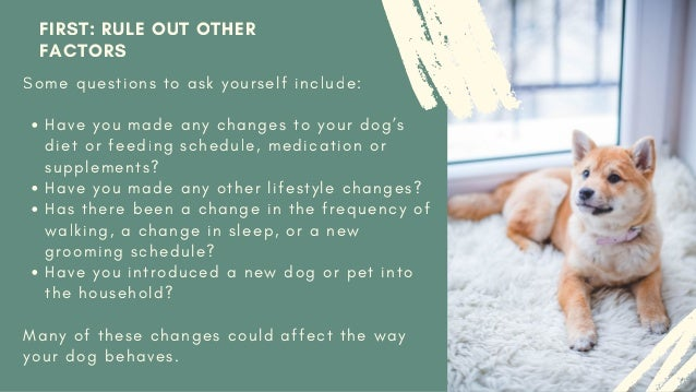 Identifying and Helping Your Dog's Anxiety Slide 3