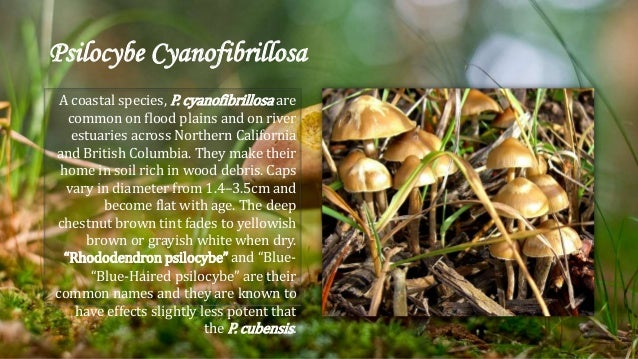 Identifying Different Types of Magic Mushrooms